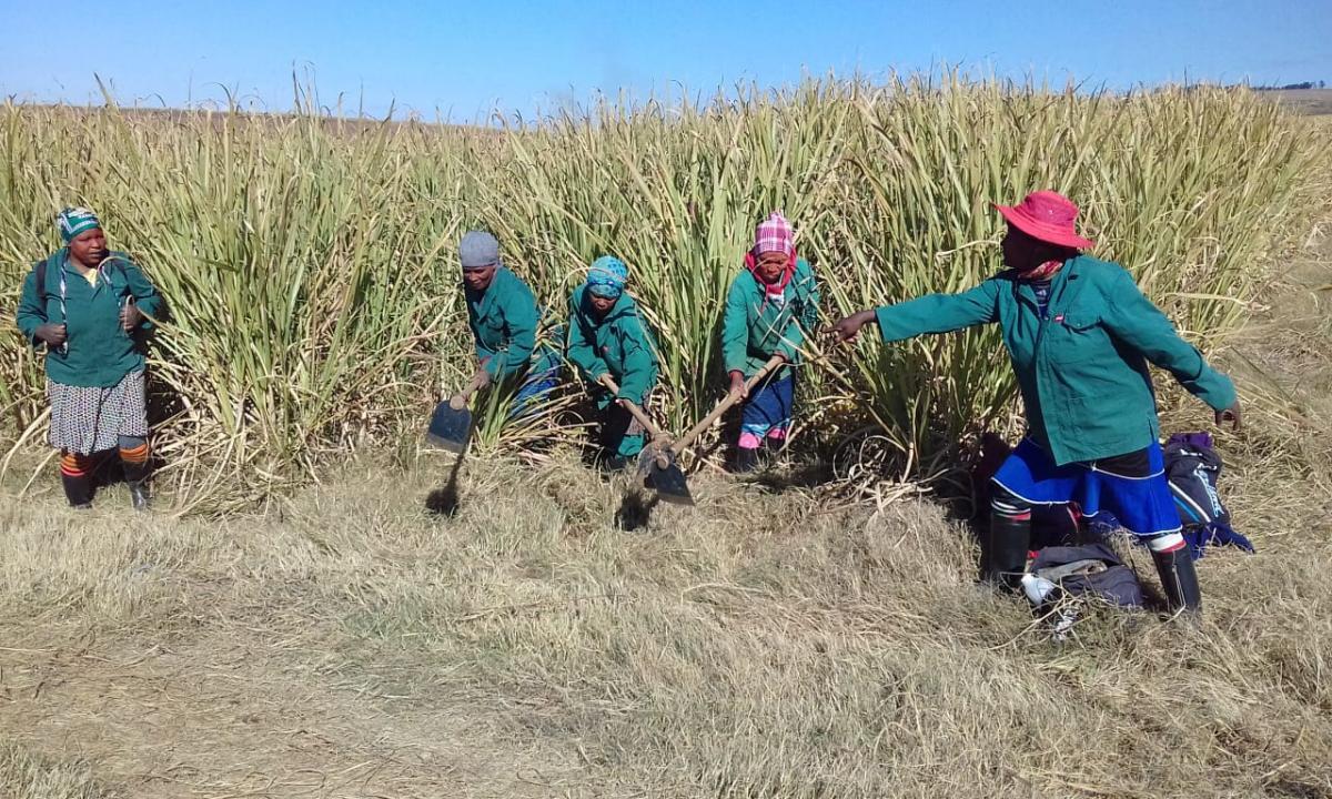 Ithuba Agriculture about 500 people in Kranskop in KwaZulu-Natal