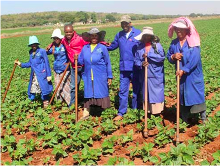 Photo caption: Members of the Kopano Disabled Cooperative are using their farming skills to fight poverty and improve the lives of residents in Rooibokkop, Limpopo. (Picture: Mduduzi Tshabangu)