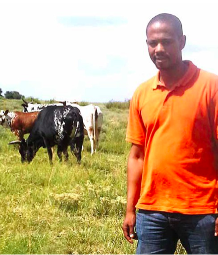Photo caption: Victor Matjuda has worked his way up to become one of the country's top young stud breeders, thanks to the skills he gained through the Nguni cattle breeding programme.