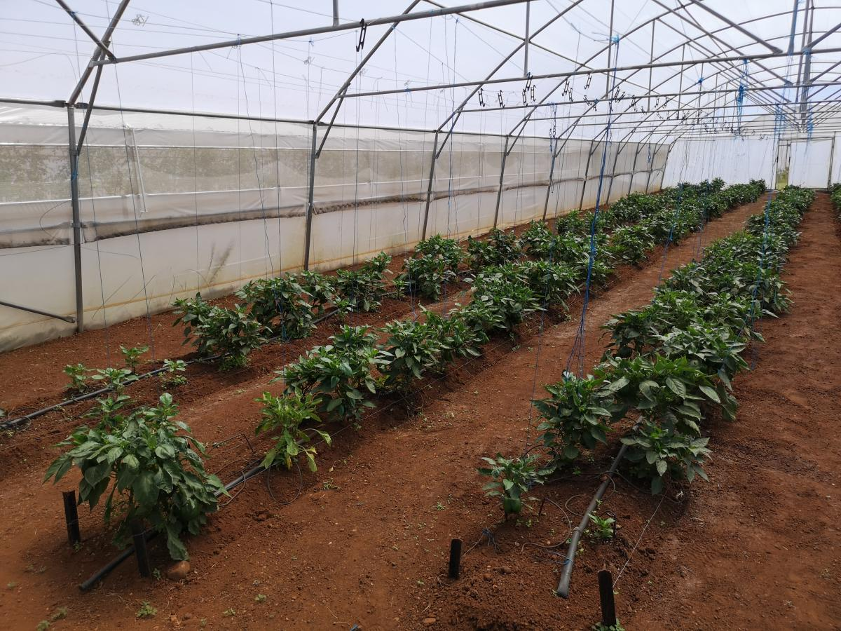 The Voice Out Deaf cooperative is creating jobs for the hearing impaired by growing vegetables in the Rand West Agri-park in the Rand West Local Municipality.