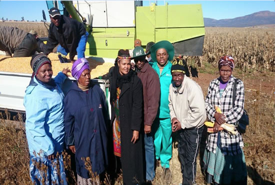 The Executive Mayor of Chris Hani District Municipality, the Mayor of Intsikayethu Local Municipality and the members of the cooperative during the harvest.