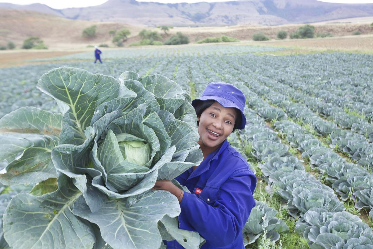 An agricultural programme by the Imbabazane Local Municipality is providing muchneeded job opportunities for young people in the area.