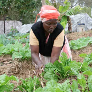 Cabangile Mdletshe is one of 180 residents of Dukuduku in Mtuba area that reaps the benefits of the One Home, One Garden project that has been implemented in the area using the permaculture technique as a means of ensuring food security in the rural homesteads.