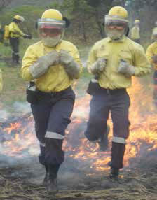Environmental programmes such as Working with Fire have created thousands of work opportunities.