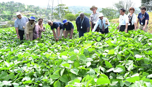 The eThekwini Municipality has partnered with the private and religious sectors to drive the Edamame Development programme in KwaZulu-Natal.