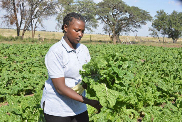 Nthabiseng Kgobokoe inspecting spinach at her farm outside Mahikeng.