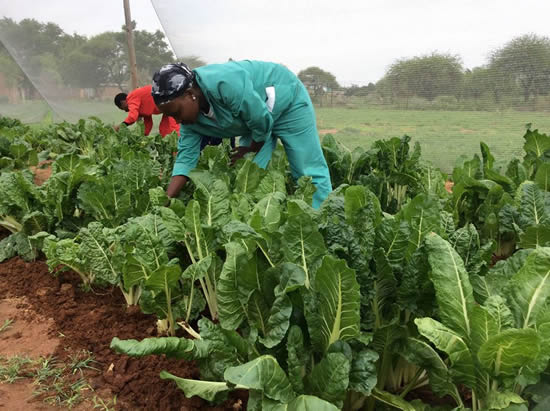 Smallholder farmers are exepected to play a major role in the implementation of Operation Phakisa for Agriculture, Land Reform and Rural Development.