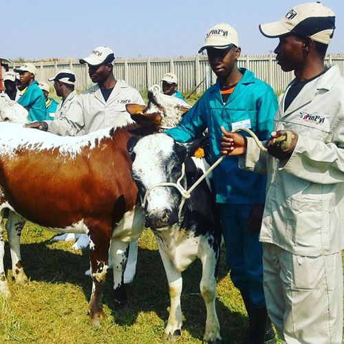 Veterinary science is one of the subjects taught at the Magaliesburg School of Specialisation. (Photo: Gauteng Department of Education)