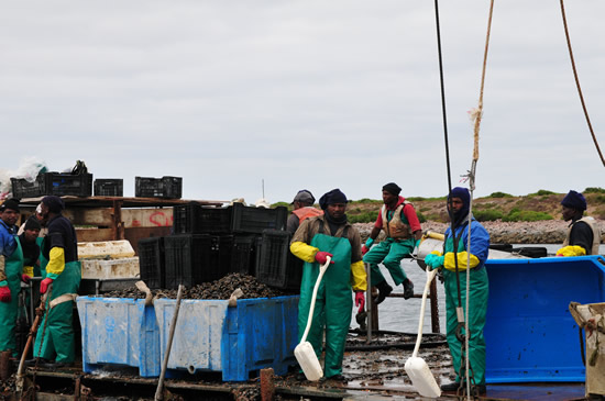 Mussel aquaculture projects in Saldanha Bay have grown the fishing towns economy and created work (Photo: Innovation Norway