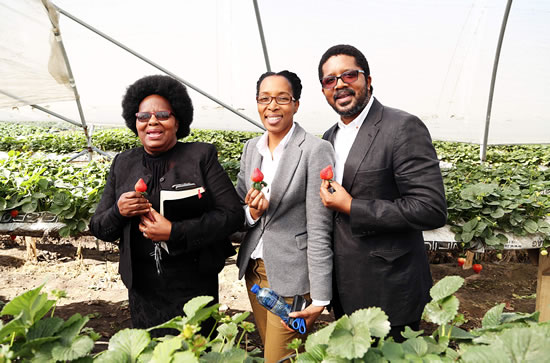 Yoliswa and Xolani Gumede, a young couple from KwaZulu-Natal, are proud owners of Cappeny Estates, the first black-owned strawberry farm in KwaZulu-Natal.