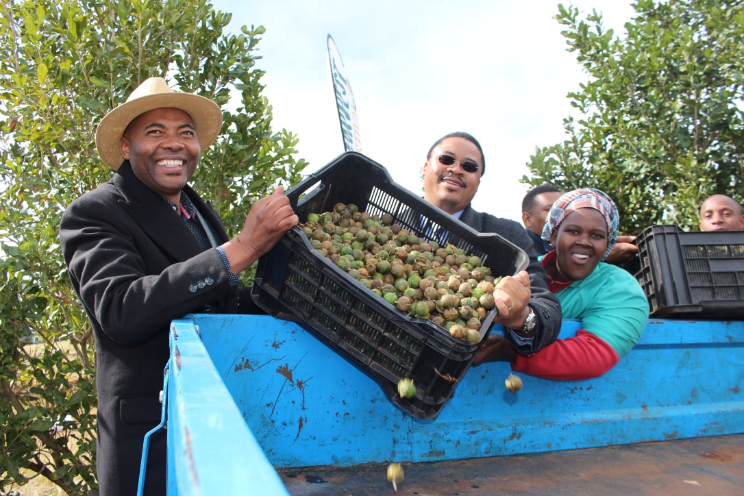 Eastern Cape Ncera Macadamia Farming director Mkhululi Phakade and the Eastern Cape Rural Development and Agrarian Reform MEC, Mlibo Qoboshiyane, offload a crate full of macadamia nuts, while Ncera Macadamia farm worker, Nonzukiso Batyi, looks on. Pic: DRDAR Communications.