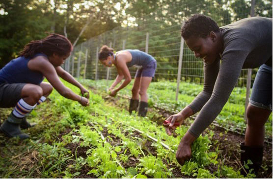 Young people in KwaZulu-Natal stand to benefit from the young farmers' development programme.