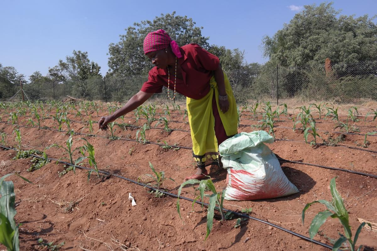 One of the ways that the Adaptation Fund assists rural female farmers is encouraging them to use climate resilient crops.