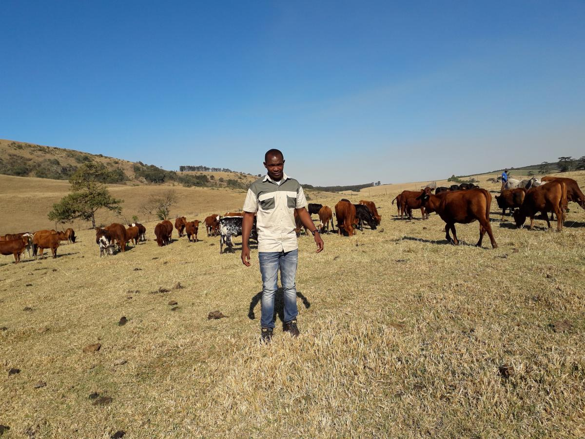 The young livestock farmer Thabiso Sithole sees farming as a business.