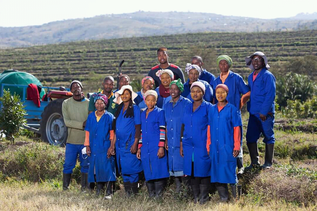 The Amajingqi Macadamia Farming has created about 150 jobs for locals.