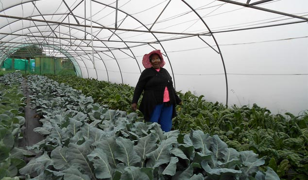 Hlaleleni Buthelezi shows off her hydroponically grown spinach, broccoli and cabbage.