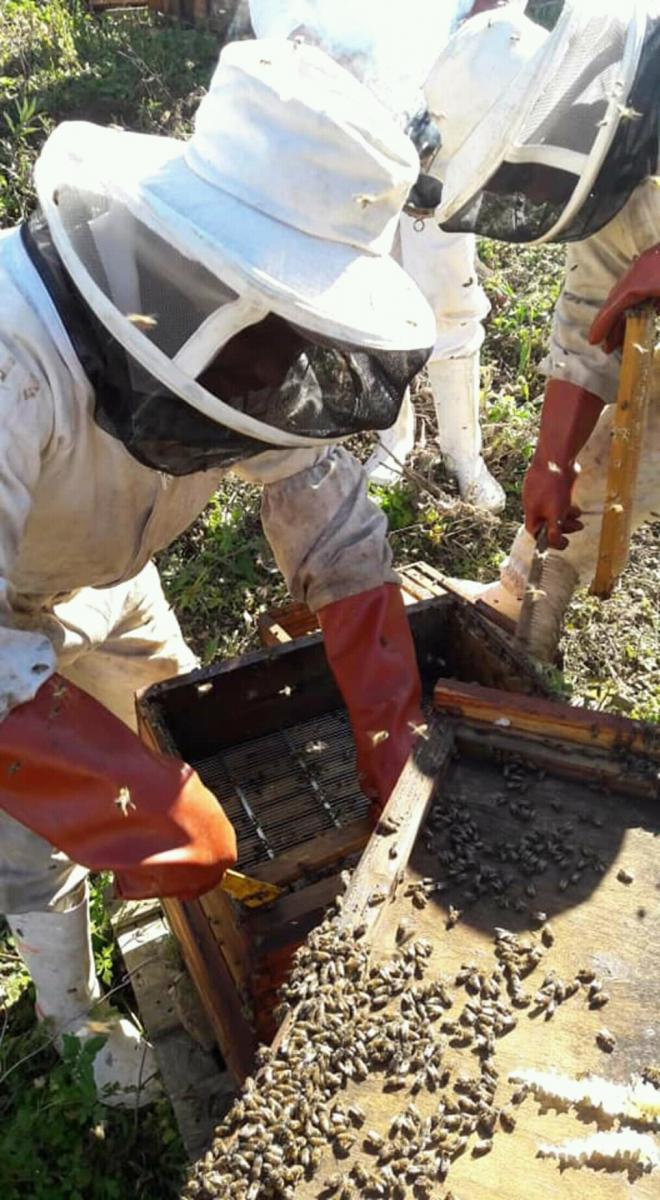 Sithembile Nzuzo hopes to see his beekeeping and honey business expand to other provinces.
