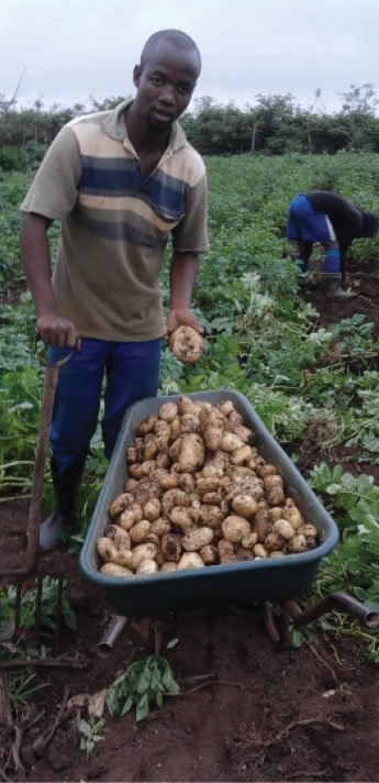 Yonela Ndzoboyi is breaking new ground in potato farming.