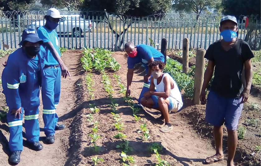 Members of the Elangeni Green Zone garden working the land in the inner city of Durban.