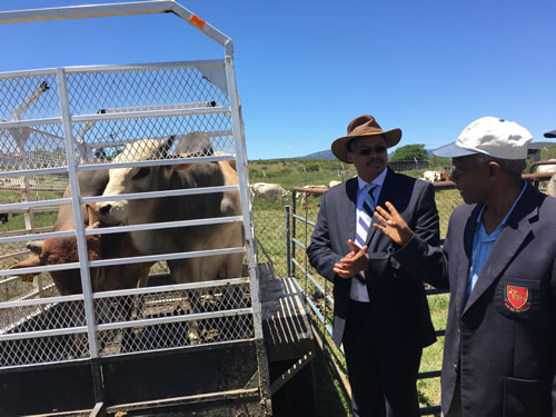 MEC Qoboshiyane with Reverend Mzoxolo Mxekeza a recipient of two Boran Bulls.