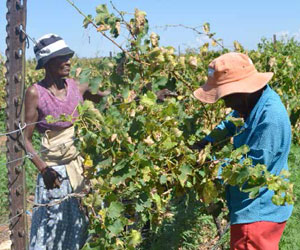 Black farmers will benefit from training that will be offered at a multi-purpose training and development centre currently being built in Pretoria.